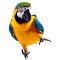 Adams Parrots Farm
